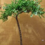 3.2m Curved Artificial Tree